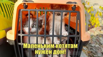 Маленьким котятам нужен дом!