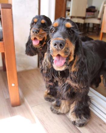 Собаки-близнецы прославились своими роскошными ресницами и им в пору рекламировать тушь
