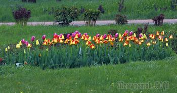 Крым. Симферополь. Ботанический сад КФУ. 19-е апреля