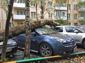 На автомобиль упало дерево: куда звонить и с кого требовать компенсацию