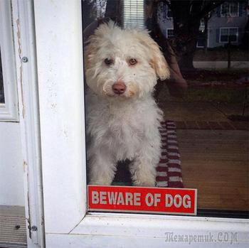 30 «свирепых» зверей, скрывающихся за табличками «Осторожно, злая собака»