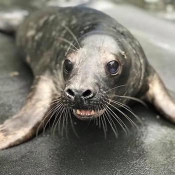 20 умилительных доказательств, что нет очаровательнее зверя, чем тюленчики