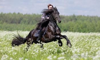Не нужна коню узда (Стих)