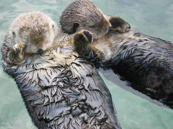 10 удивительных фактов о животных