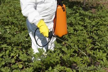 Как избавиться от колорадского жука: 5 проверенных способов и одно ноу-хау