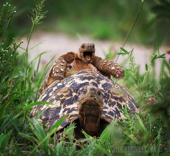 Финалисты фотоконкурса Comedy Wildlife Photography Awards