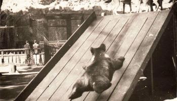 Детки в клетке: 154 года Московскому зоопарку