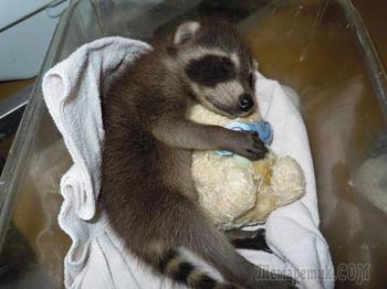 Животные спят в обнимку с плюшевыми игрушками