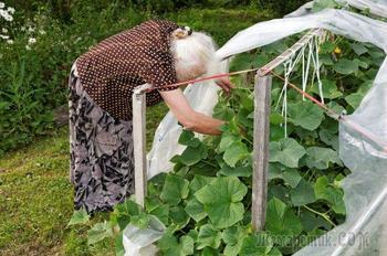 10 июльских приемов, которые помогут удвоить урожай огурцов