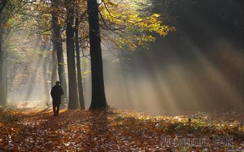 Я сегодня в лесу был осенним листом