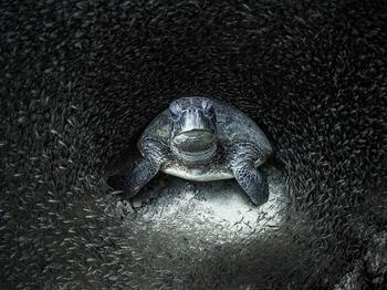 Лучшие фотографии из жизни океанов Ocean Photographer of the Year 2021