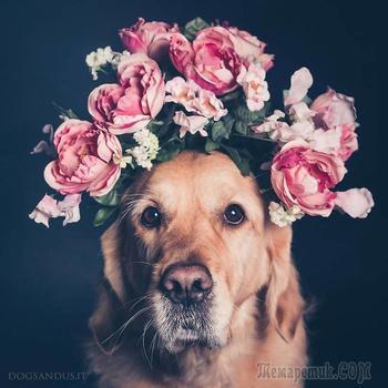 20 забавных пёсилей в фотографиях, показывающих всю палитру собачьих эмоций