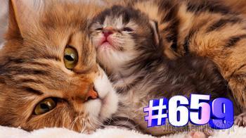 Кошки и милые котята (часть 2)👍🤣🐱