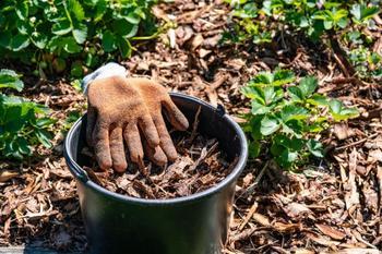 План по защите клубники от болезней и вредителей на весь сезон