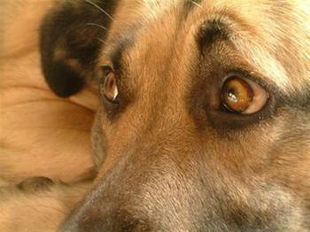 Покусала собака: как наказать хозяина и возместить ущерб?