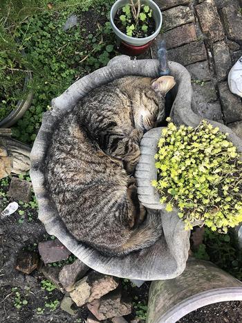 """16 невероятно """"жидких"""" и податливых котиков, которые показывают чудеса гибкости"""