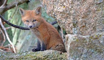 Вжух, и вы в джунглях: 10 крутейших онлайн-трансляций про диких животных по всему миру