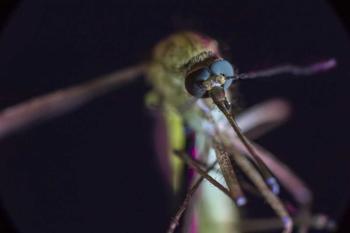 До первой капли крови: война людей и насекомых
