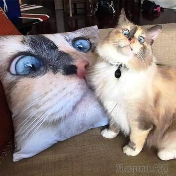 18 кошек с ошибкой в программе, которые позабавили странным поведением своих владельцев