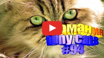 Смешные коты | Приколы с котами | Видео про котов | Котомания # 94