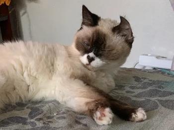 20 смехотворно нелепых котиков, которые и рады бы хорошо получаться на фото, но нефотогеничность мешает
