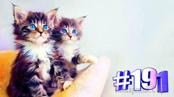 Смешные коты | Приколы с котами | Видео про котов | Котомания # 191 (видео)