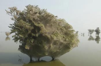 Уникальные научные фотографии, на которых запечатлено нечто поистине непостижимое