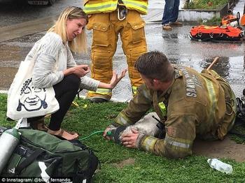 Пожарный реанимировал маленькую собачку