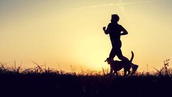 Какая собака подходит по знаку зодиака?