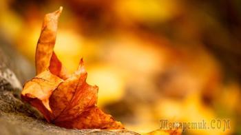 О листве и обо мне