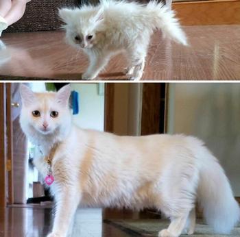 19 котят, которые превратились в величественных кошек, показав, как быстро летит время