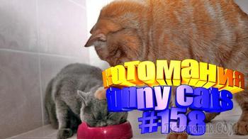 Смешные коты | Приколы с котами | Видео про котов | Котомания # 158