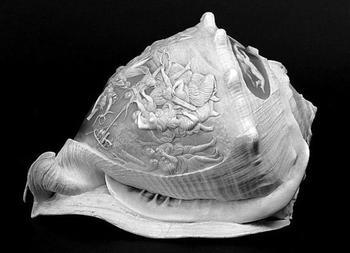 Глиптика по раковинам молюсков