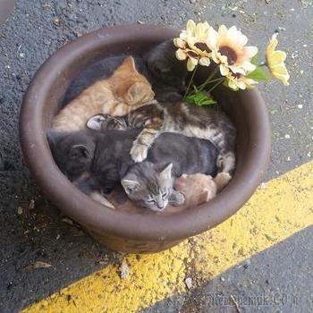 20 доказательств от котиков, что для хорошего сна важно лишь желание