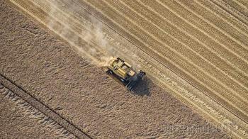 Экспорт пшеницы из России вырос