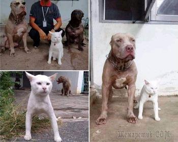 19 котов с «безуминкой», которые ведут себя странно, но зато это смешно
