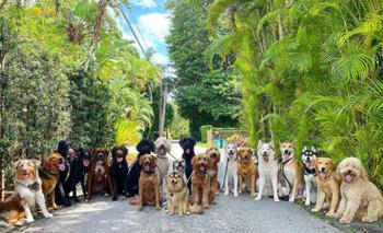 В этом центре дневного пребывания для собак умеют невозможное