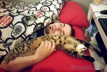 Люди, которые пытаются не любить кошек, но у них не получается