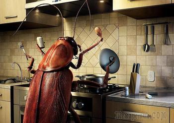 Лавровый лист против домашних насекомых и вредителей на дачном участке