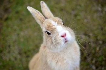 Окуносима - остров кроликов в Японии
