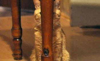Коты-ниндзя, которые в совершенстве освоили древнее боевое искусство ниндзюцу