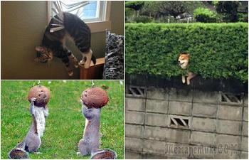 Забавные животные, которые застряли, но не растеряли оптимизма