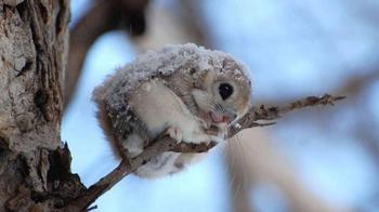 12 доказательств того, что белка-летяга — самый милый зверек на свете