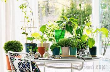 Подборка фото самых красивых и необычных комнатных растений