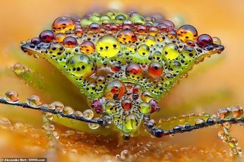 Жизнь насекомых: удивительные макрофотографии Александра Метта