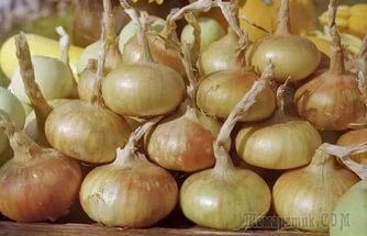 Как вырастить крупный лук. Секреты выращивания