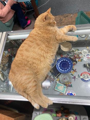 19 котов завидной ширины морды и повышенной пушистости