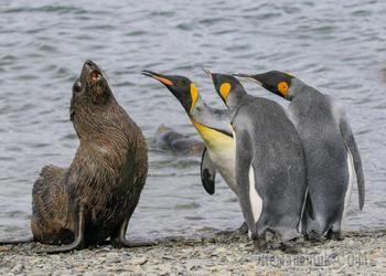 Самые смешные фотографии дикой природы 2018 были объявлены и они сделают ваш день
