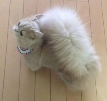 Кошка Белль с невероятно пушистым хвостом
