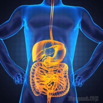 Мощные рекомендации: как вылечить ваш кишечник с помощью питания